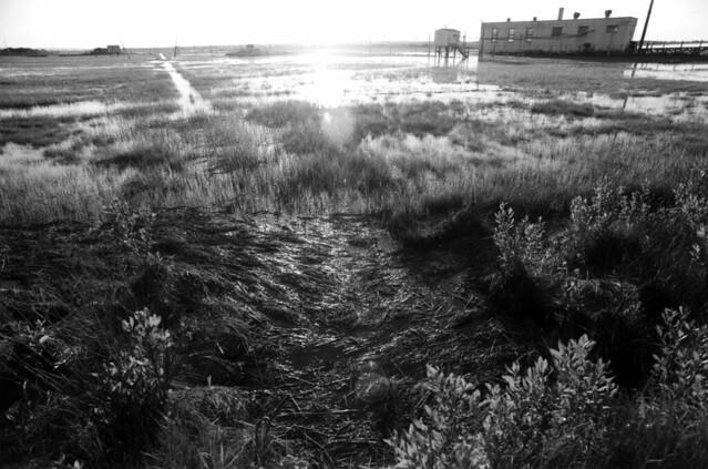 sparkle marsh