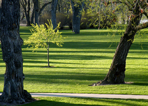 park morning landscape scenery shadows lawn hollidaypark cheyennewy