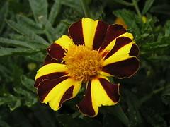Flores Francia 069