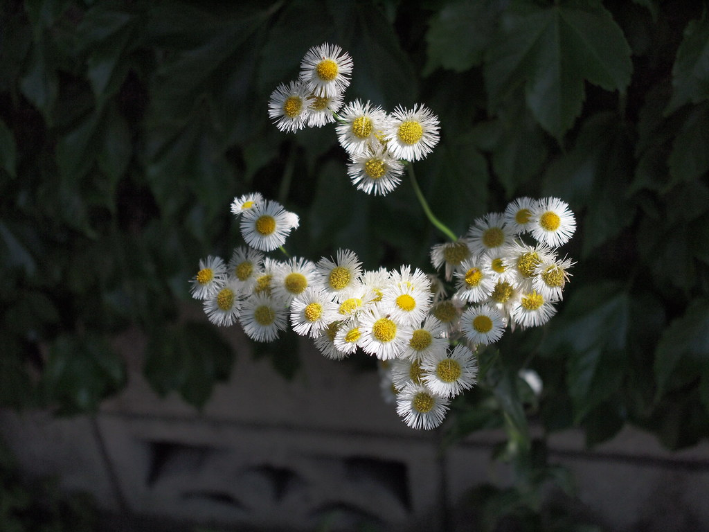 Contax G Carl Zeiss T* Biogon 28mm f2 8 + Olympus E-P1 | Flickr