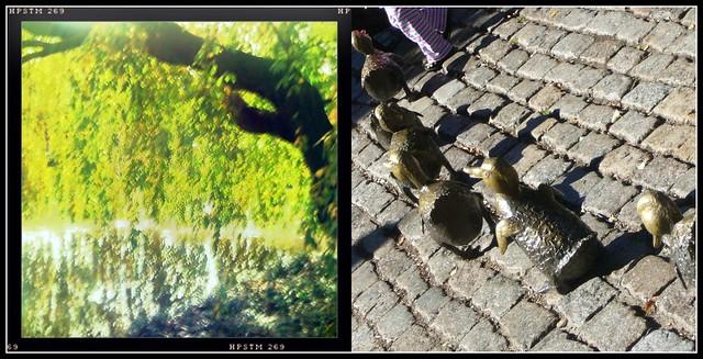 Fall in Brooklyn & Boston