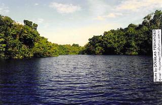 Floresta Amazônica/Amazon Rain Forest/Amazonia (Iranduba, Amazonas, Brasil).
