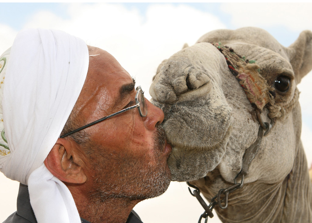 Man Kissing Camel near Sphinx in Cairo