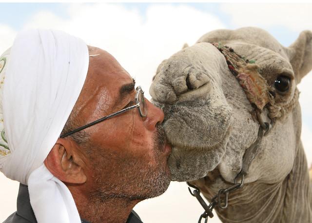 Man Kissing Camel near Sphinx in Cairo