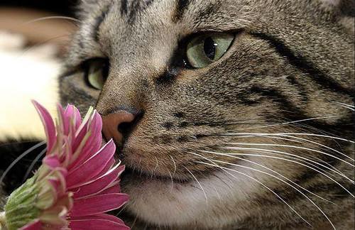 Resultado de imagem para animais cheirando flores