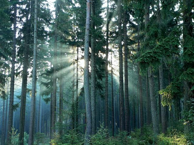 Misty Morning at the Ochsenkopf Slopes