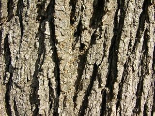 Tree bark | by kahunapulej