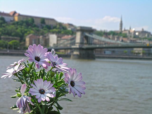 Chain bridge with flower