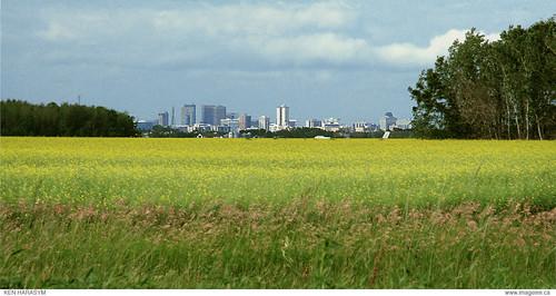 Winnipeg over canola   by Ken of imageinn.ca