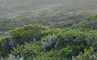 Northern Coastal Scrub 1
