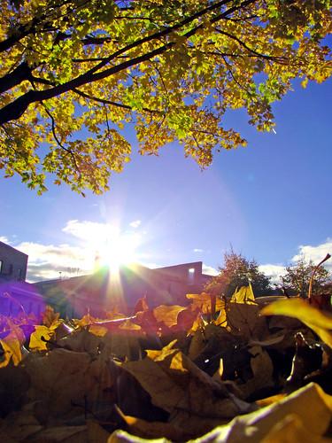 autumn tree fall college leaves greenbay uwgb