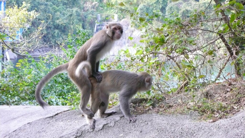 hot monkey sex | monkey exhibitionists do it in front of