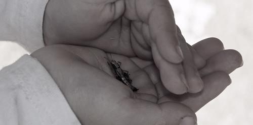 grasshopper II   by Fimb