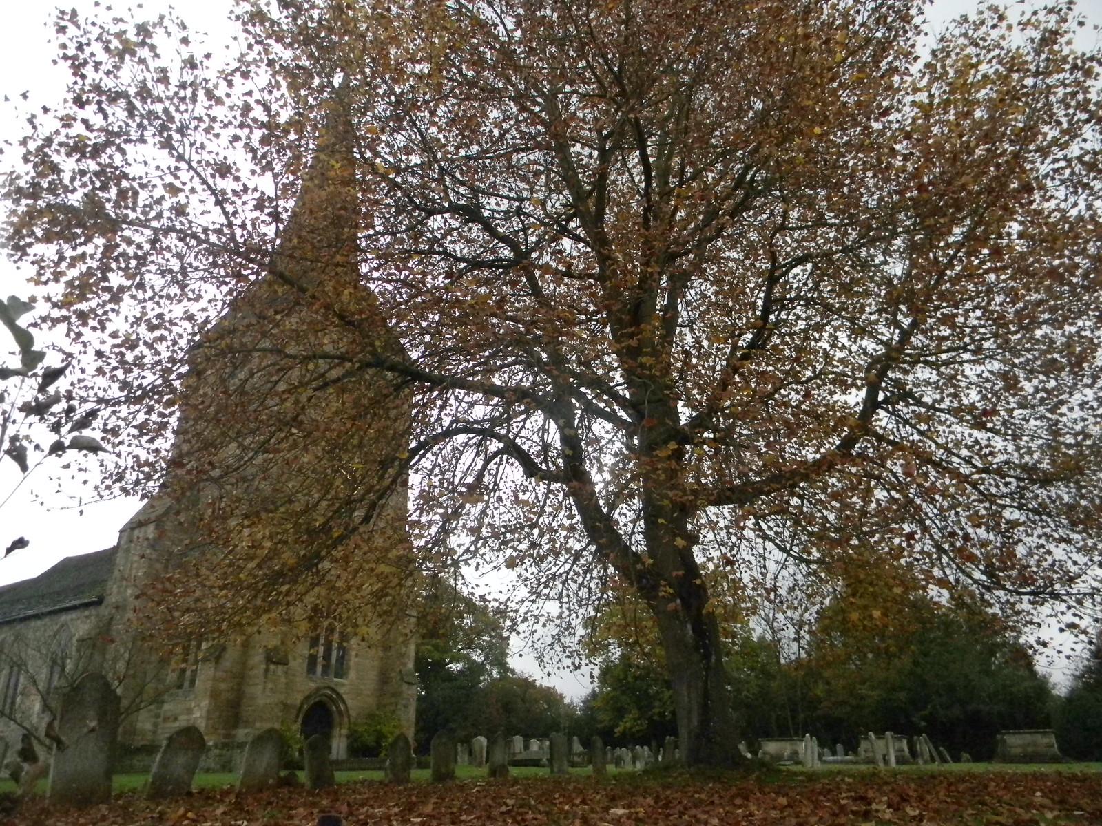 Hartfield Church...and tree Ashurst short circular