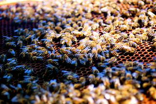 Bees!   by Todd Huffman
