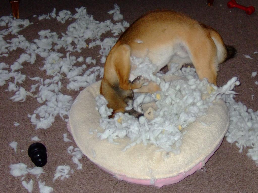 Kumi Disembowling his Bed