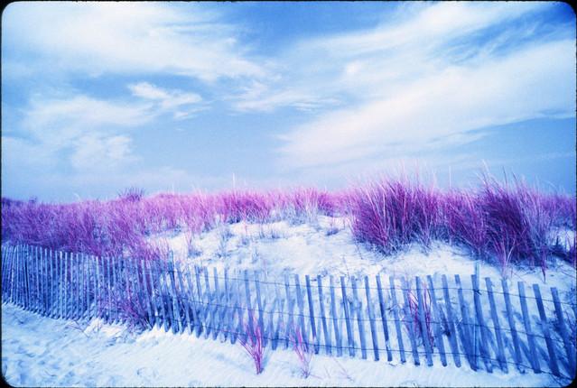 purple graze all in my brain