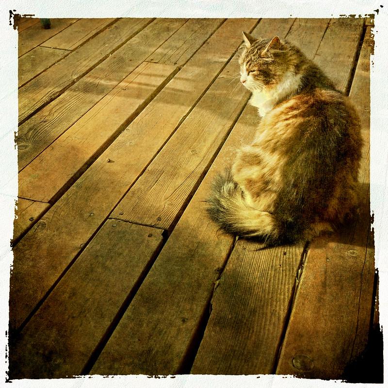 The Cat portrait session .. 3/3