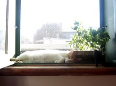 sunning   by un flaneur