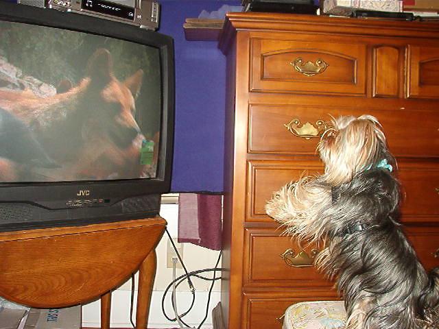 Dan E. watching TV