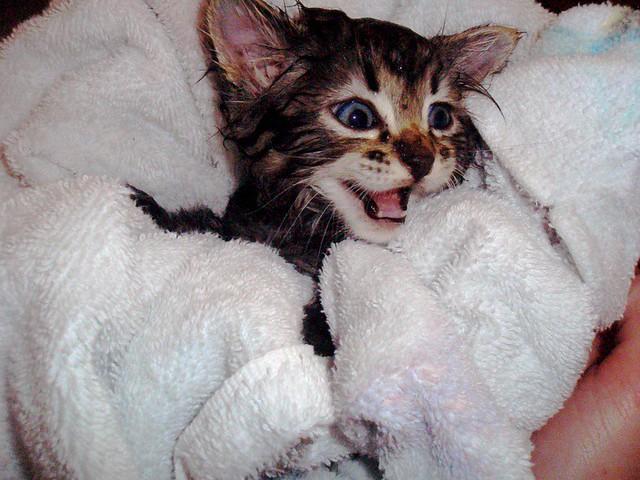 Kitten + Bath = Aww.