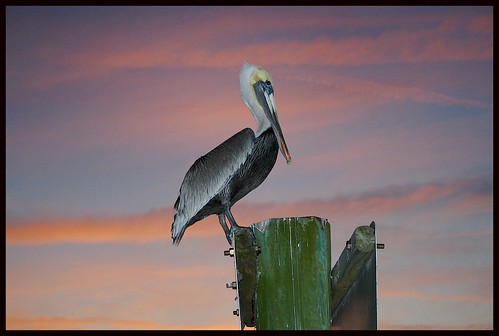 sunset sky color bird nature bravo florida photos outdoor pelican outdoorphotos tomokastatepark outdoorphotography jimbrekke jimsoutsidephotos impressedbeauty avianexcellence jimbrekkecom jamesbrekkecom
