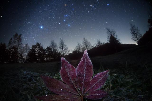 Frosted Leaf  Galaxy