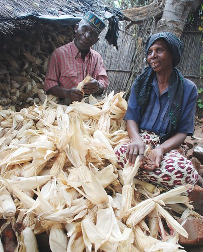 Malawian family with drought tolerant maize crop | by CIMMYT