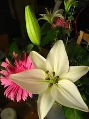flower arrangement | by mattlong