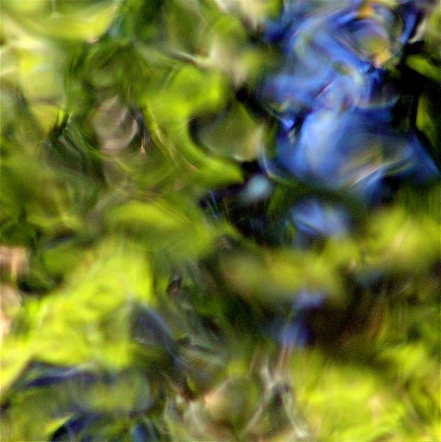 A blue rose for Bluesrose!