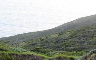 Northern Coastal Scrub 2
