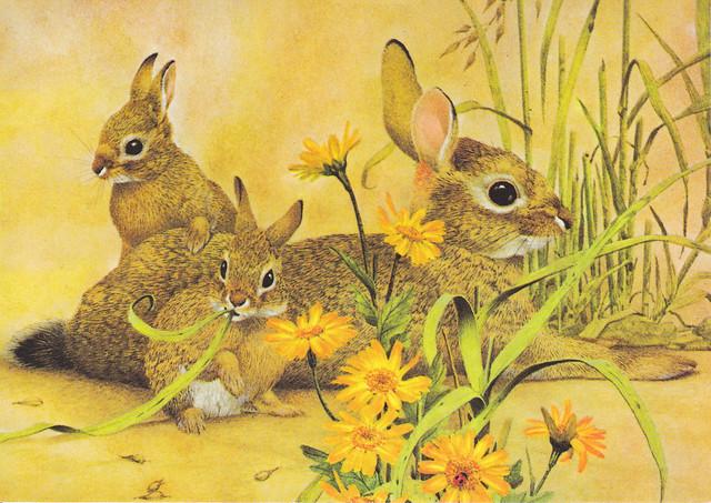 Doe Rabbit & Babies Postcard