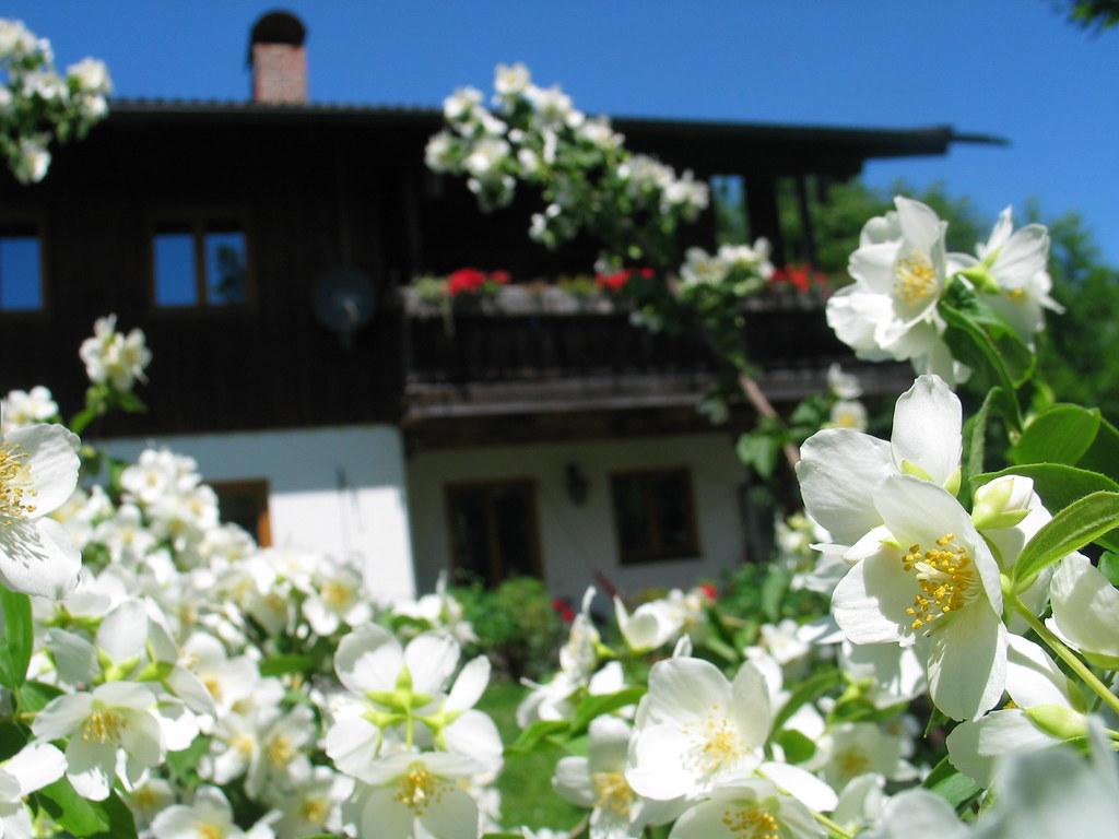 Jasmin Jasmine House Haus Garden Garten Bayern Bavaria Ger Flickr
