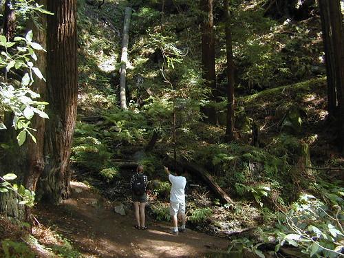 Hikers in Redwoods Big Sur