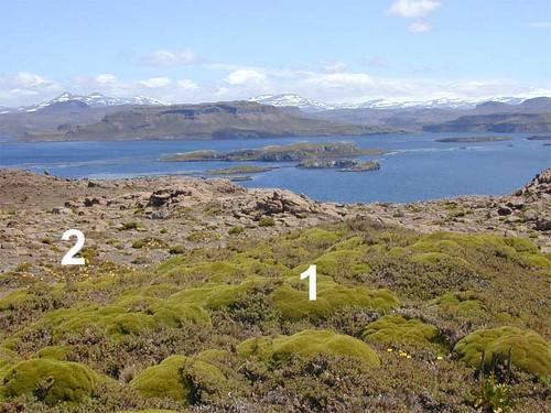 voyage geotagged vegetation kerguelen stationalpinejosephfourier geo:lat=49329597 geo:lon=7018753 bassealtitude