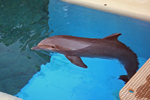 Dolphins at Siegfried and Roy's | by mulf