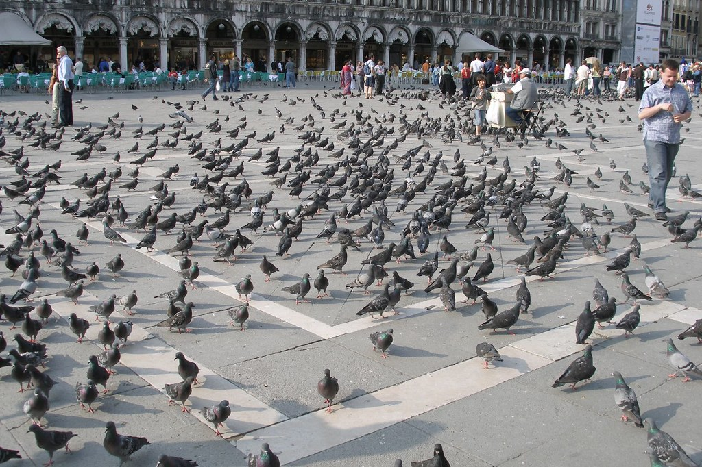 San Marco pigeons (2006-05-580) | Piazza San Marco, often kn… | Flickr