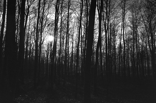 trees winter sunset bw forest canon geotagged ae1 sw 24mm adox chs100 supersnowmanphotographs geolon9982002 atm49 geolat51520881