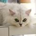 cat #2 HIME