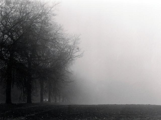 Fog And Car Lights