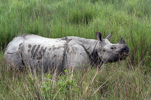 One Horned Rhino Assam - India | by Diganta Talukdar