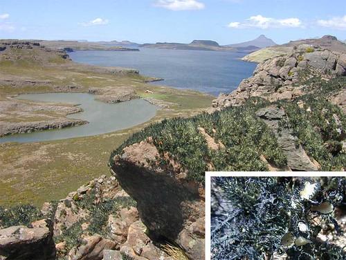 voyage geotagged lichen kerguelen stationalpinejosephfourier geo:lat=49329597 geo:lon=7018753