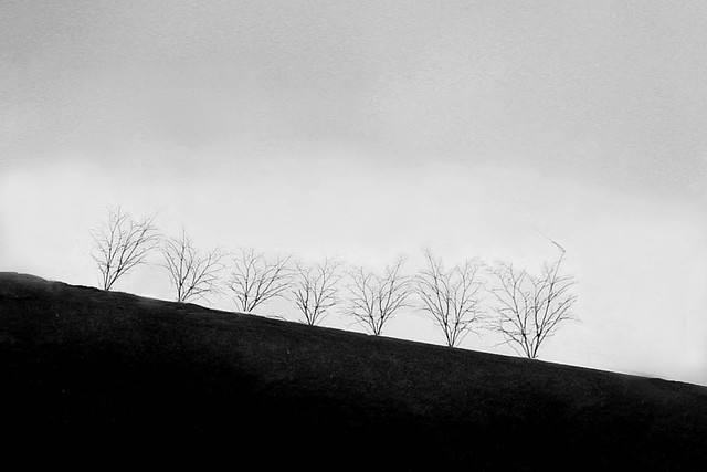 Trees Dance Their Homage To Ingmar >> The Trees Dance Their Homage To Ingmar Bergman I Miss Him Flickr