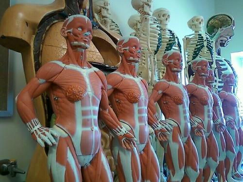 Anatomy | by Poppy Wright
