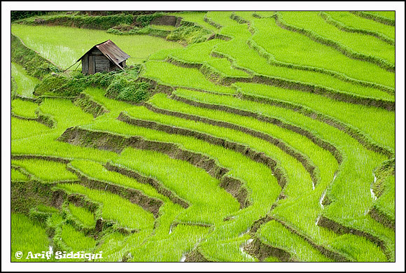 The Green Town - Ukhrul ( Manipur, India)