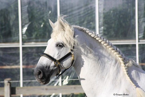 Andalusian | by Daisyree Bakker