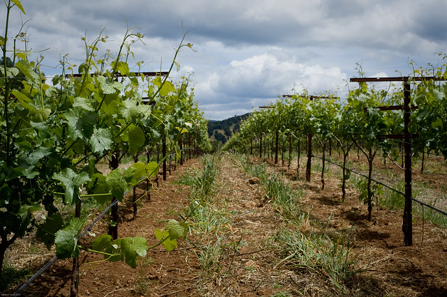 Wine Country-4605
