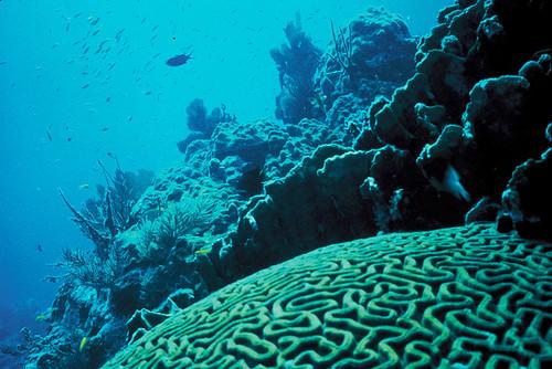 Coral Reef, Florida