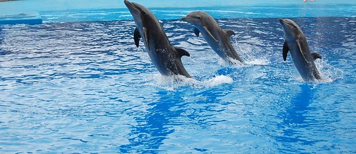 Dolphins | by /// MH \"|500|217|?|9207ab76555e233e1c3895c9d90f17cb|False|UNLIKELY|0.3210762143135071