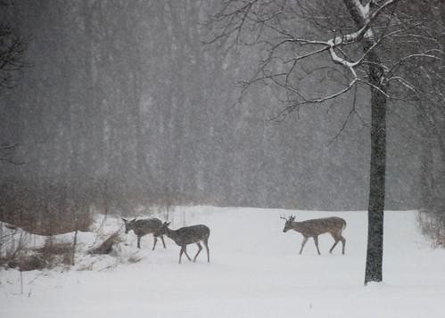 Website:Hunting
